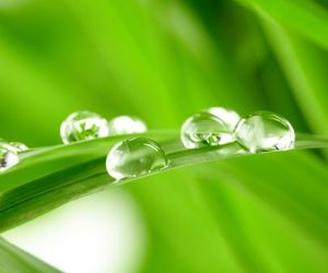 dew, green, and drops image