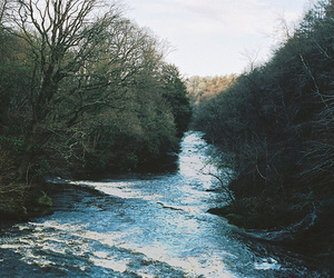 trees, nature, and water image
