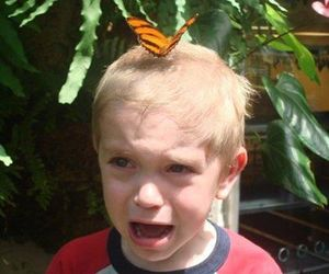 butterfly, kid, and lol image