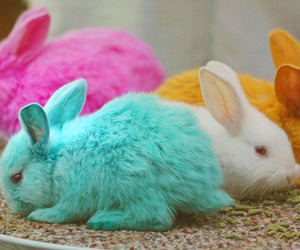 rabbit, bunny, and pink image