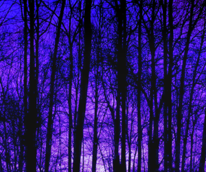 black, forest, and purple image
