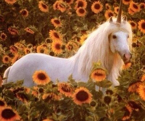 unicorn, flowers, and sunflower image
