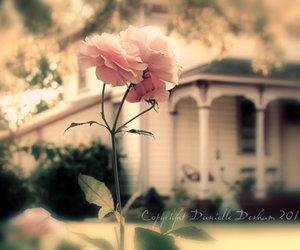 house, photography, and roses image