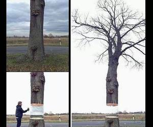 art, tree, and nature image