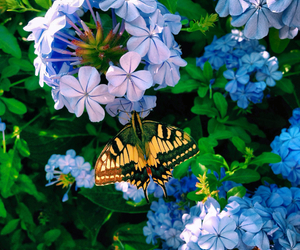 butterfly spring flower image