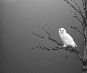 owl, black and white, and tree image