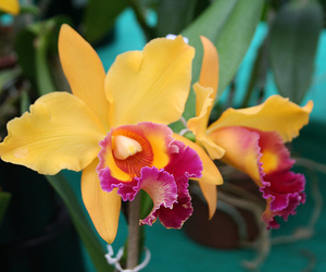flower, orchid, and plants image