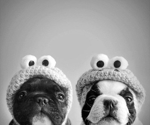 dogs, tierno, and perros image