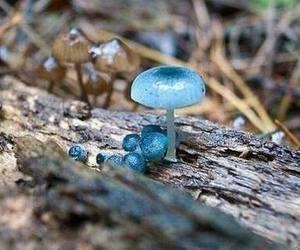 Fairies, fairy, and mushroom image