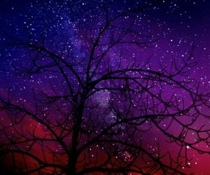 tree, stars, and night image