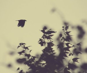 black and white and crow image