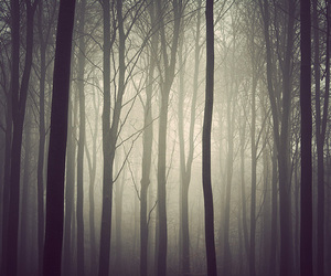 trees, mist, and forest image