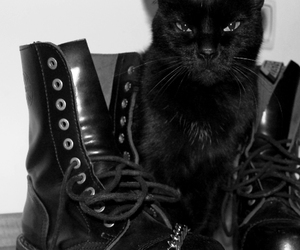 cat, black, and boots image