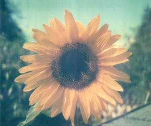 flower, sun, and vintage image