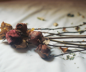flowers, roses, and vintage image