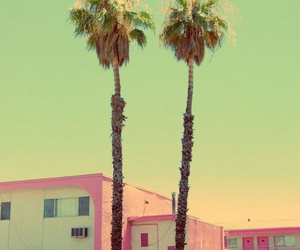 pink, summer, and palms image