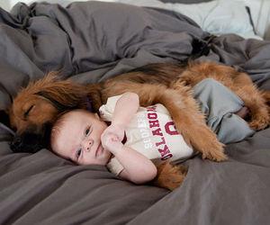 adorable, dog, and baby image