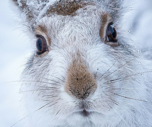 hare and rabbit image