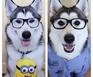 adorable, glasses, and nerdy image