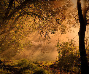 fog, forest, and mist image