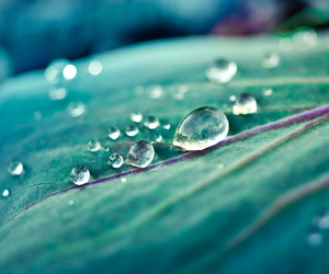 nature, drop, and leaves image