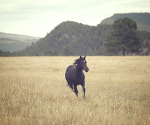 horse, animal, and black image