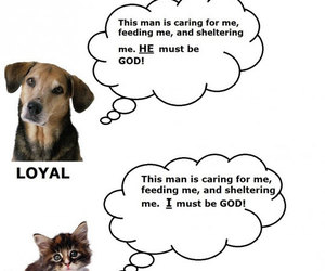 cat, dogs, and funny image