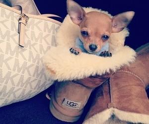 dog, cute, and ugg image