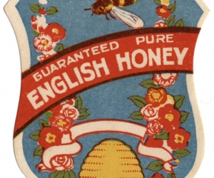 honey, illustration, and label image