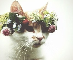 cat, flower, and flowers image