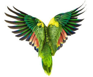 bird, parrot, and nature image