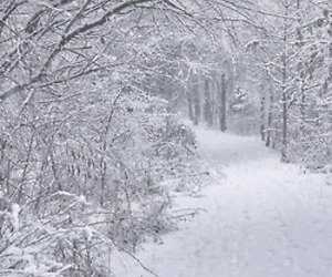 photography, white, and winter image