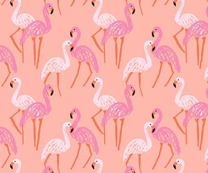 flamingos, pink, and wallpapers image