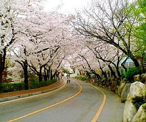 seoul, south korea, and namsan park image