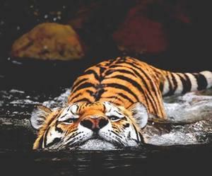 amazing, animal, and meow image