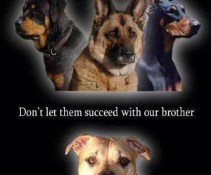 brothers, pitbull, and dogs image