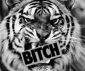 bitch, tiger, and black and white image
