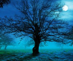 tree, moon, and night image