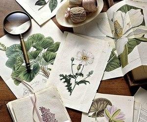 flowers, illustration, and vintage image