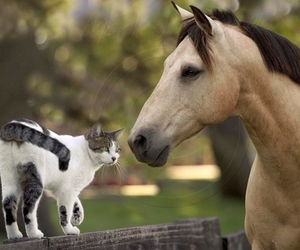 horse, animal, and cat image