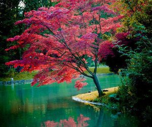 beautifull, landscape, and colorful image