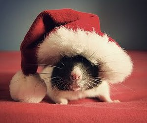 christmas, rat, and mouse image