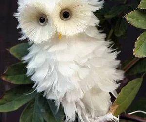 owl, pretty, and white image