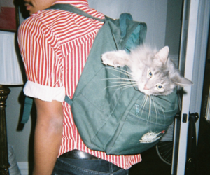 cat, boy, and hipster image