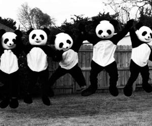 panda, black and white, and white image