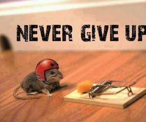 mouse, never give up, and never image