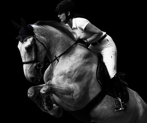 black and white, jump, and horses image