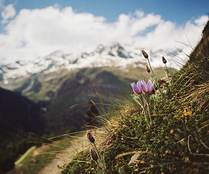 beautiful, flowers, and hiking image