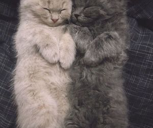 animals, baby, and kitten image
