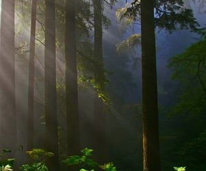 forest sun... image